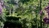 vista previa del artículo Los hermosos Jardines de Alfabia