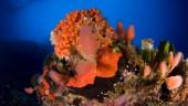 vista previa del artículo El Cambio Climático afecta a los invertebrados del Mediterráneo