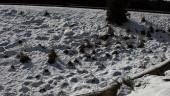 vista previa del artículo Cae la primera nevada en Mallorca