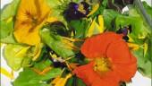 vista previa del artículo Flores comestibles en Manacor