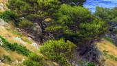 vista previa del artículo Carné por puntos para los cazadores en Baleares