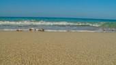 vista previa del artículo Próximo destino: Formentera