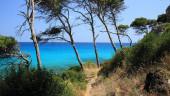 vista previa del artículo Mallorca apunta al aumento de turistas en verano